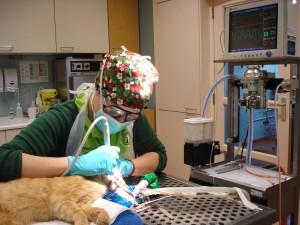 Bij ingrepen wordt narcose risico zo klein mogelijk gehouden door o.a. zuurstof toediening en monitoring van de patient.