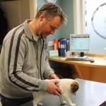 In de behandelkamer wordt uw dier behandeld door de dierenarts.