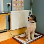 Jonge honden mogen elke maand binnenlopen voor de gewichtscontrole, daarbij worden ze gewogen door de assistentes en krijgt u antwoord op al uw vragen.