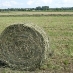 roll-of-hay-3-1390779