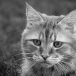 old-cat BW