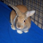 cadbury-the-rabbit-1404046